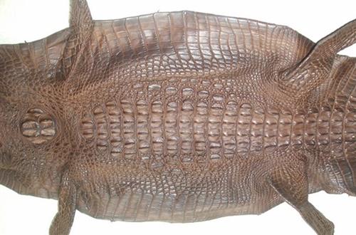 bán da cá sấu thuộc