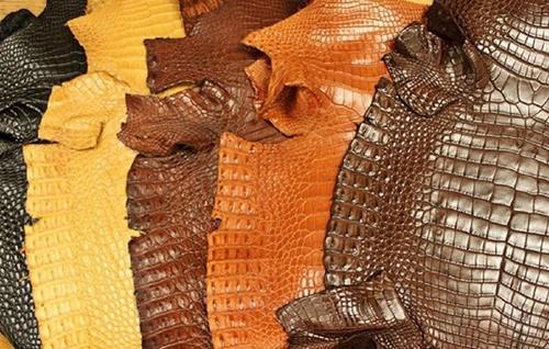 giá da cá sấu